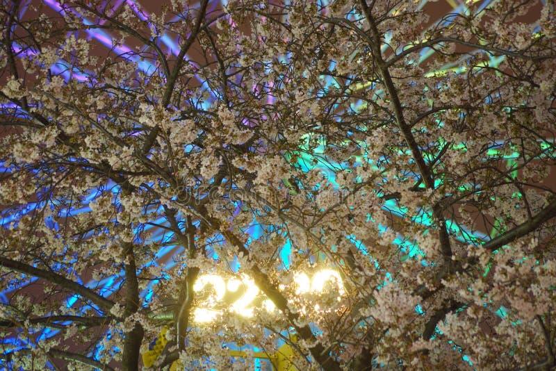 Horloge de fleurs de cerisier et de Cosmo photo stock