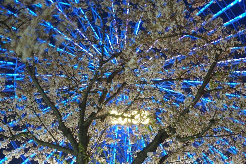 Horloge de fleurs de cerisier et de Cosmo images libres de droits