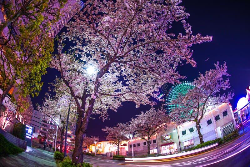 Horloge de fleurs de cerisier et de Cosmo images stock