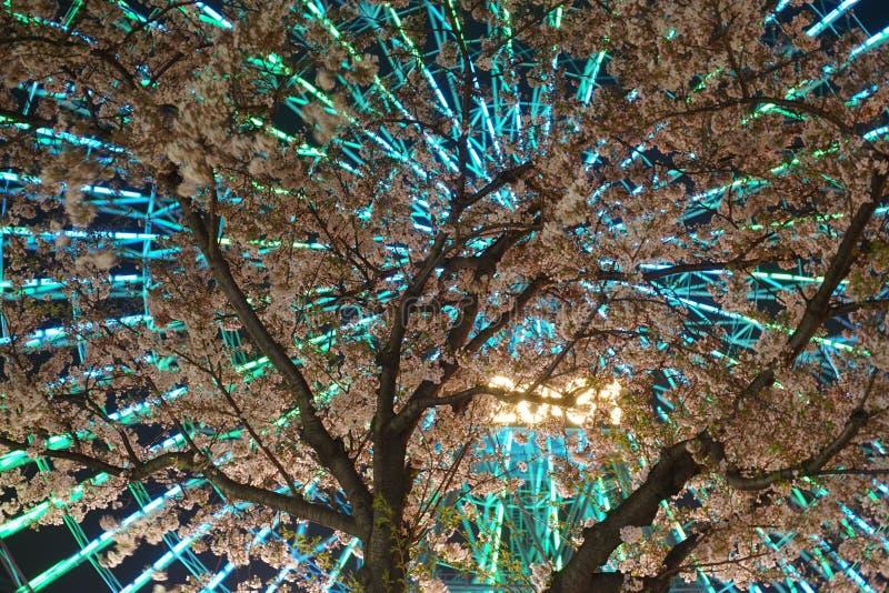 Horloge de fleurs de cerisier et de Cosmo image libre de droits
