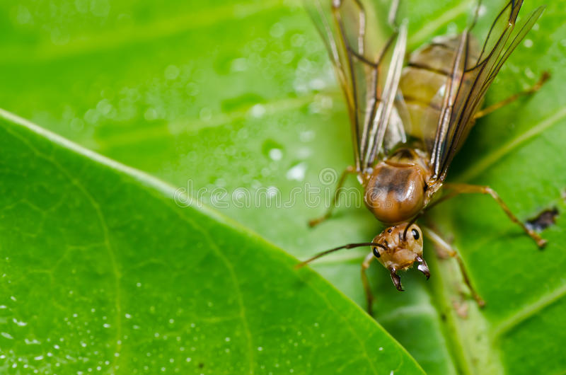 Hormiga de reina en naturaleza verde imagenes de archivo