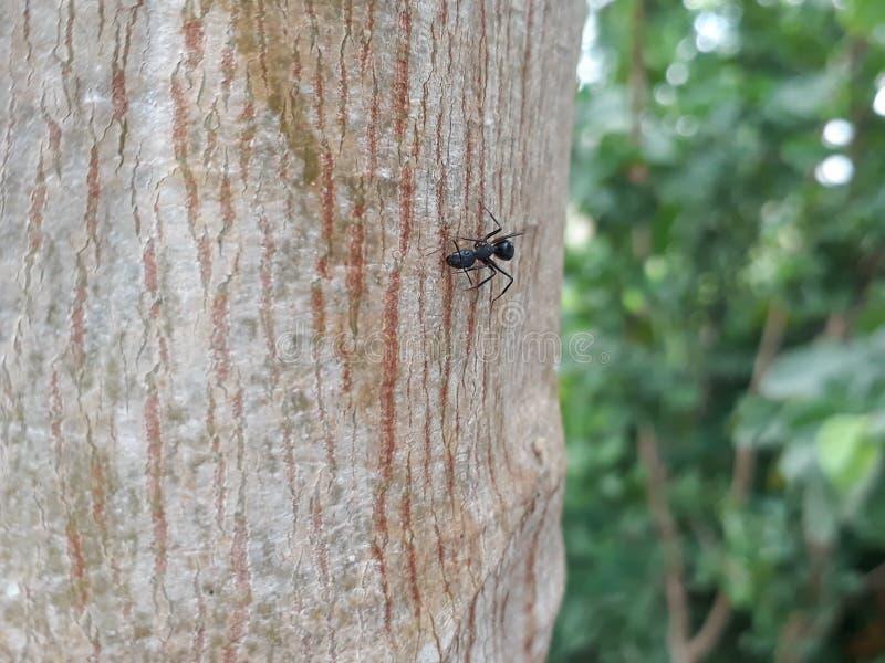 Hormiga en árbol imagen de archivo