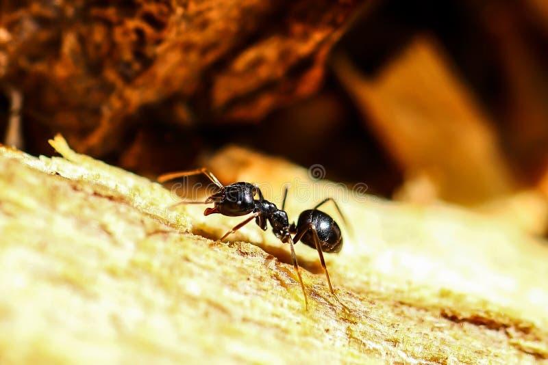 Hormiga minúscula fotografía de archivo libre de regalías