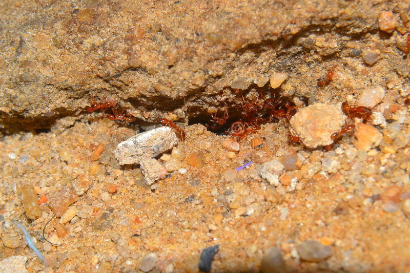 Hormigas 4 foto de archivo libre de regalías