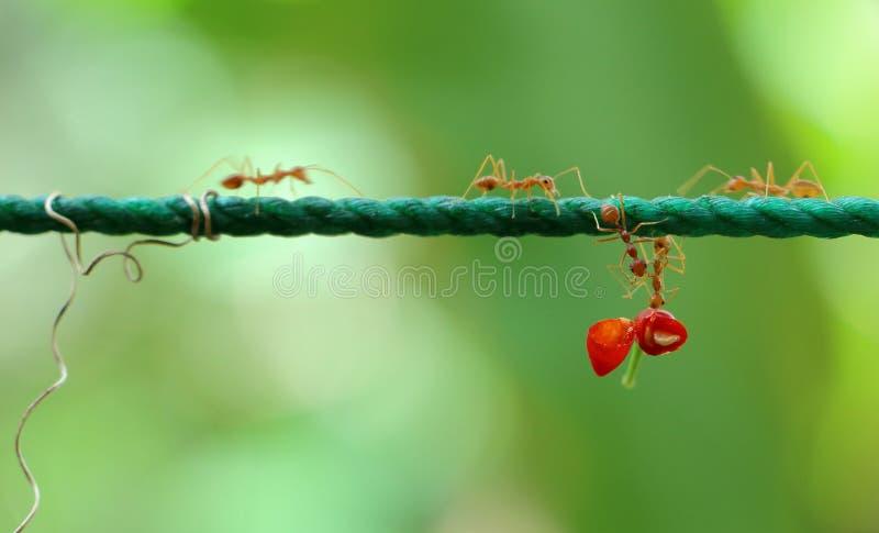 Hormigas de ayuda fotografía de archivo