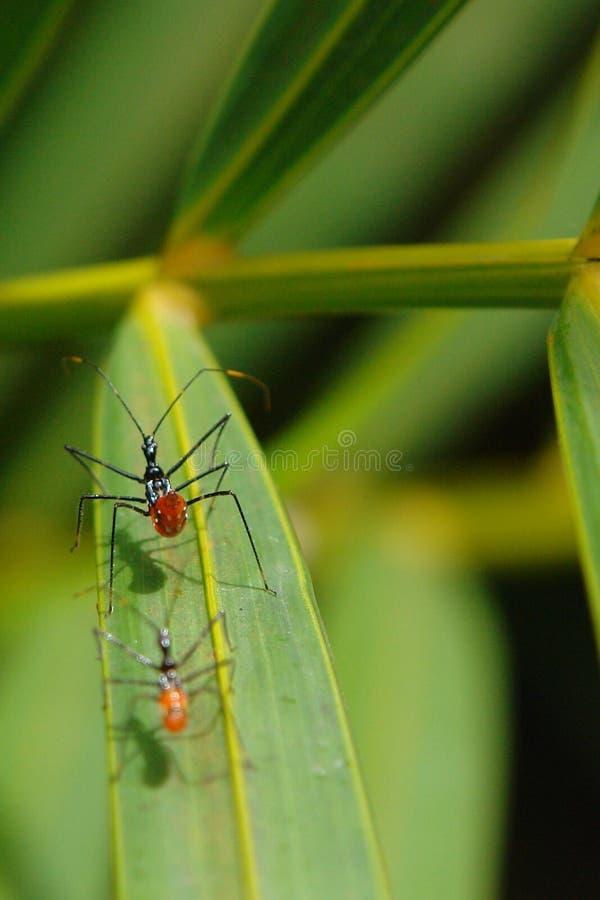 Hormigas grandes en una hoja imagenes de archivo