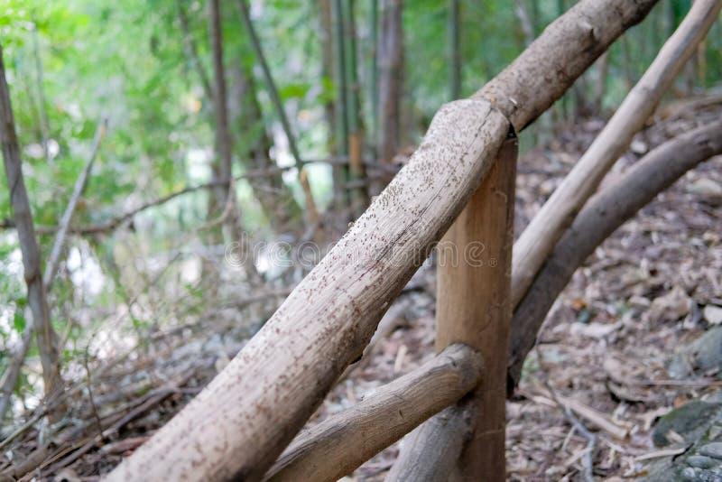 hormigas negras que caminan siguiendo otra barandilla encendido de madera en f imagen de archivo