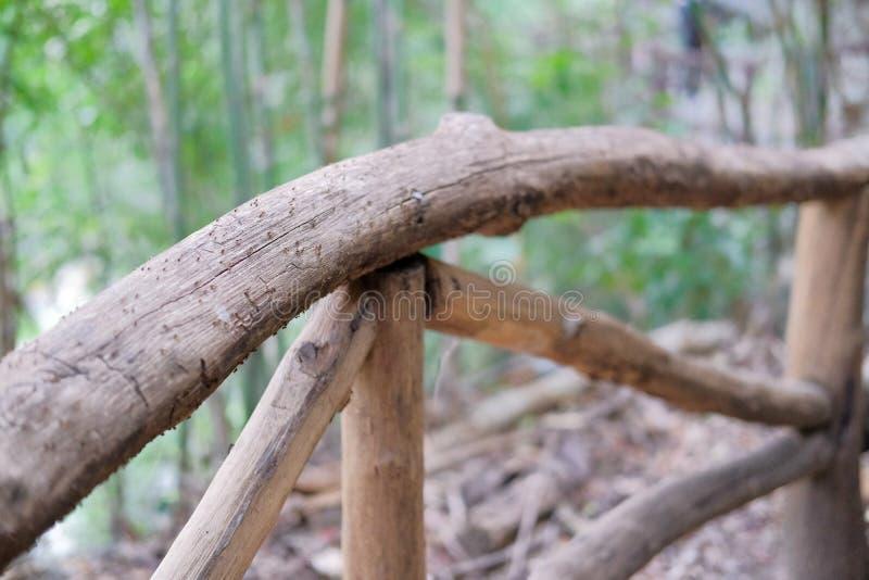 hormigas negras que caminan siguiendo otra barandilla encendido de madera en f fotografía de archivo