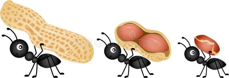 Hormigas que llevan los cacahuetes ilustración del vector