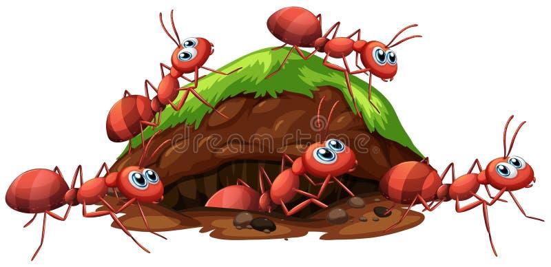 Hormigas rojas y agujero de un fuego libre illustration