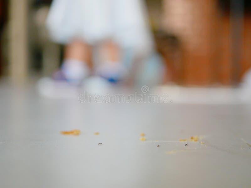 Hormigas y migas de pan en el piso de la casa con una pequeña situación del bebé del defocus en el fondo imagenes de archivo