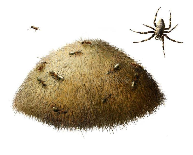 Hormiguero con las hormigas. Araña. foto de archivo