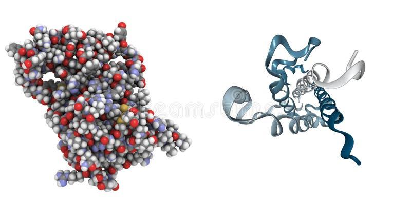 Hormona de crescimento humano (HGH) ilustração do vetor