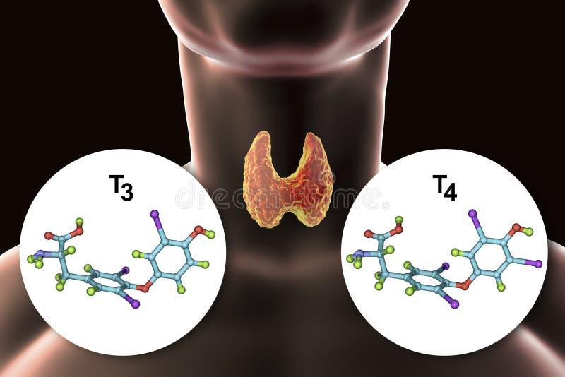 Hormonas do T3 e do T4 da glândula de tiroide ilustração royalty free