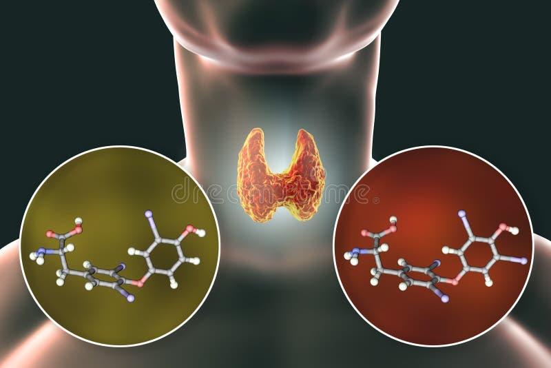 Hormonas do T3 e do T4 da glândula de tiroide ilustração do vetor