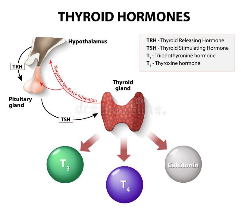 Hormonas tiroideas ilustración del vector