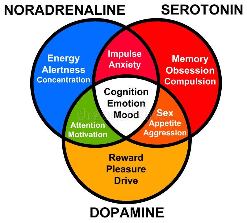 Free Hormone Functions Stock Photo - 34372510