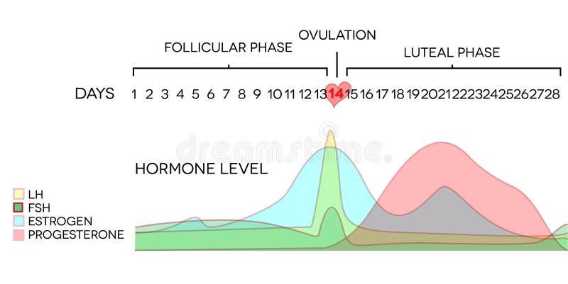 Hormone level. Menstrual cycle hormone level. Avarage menstrual cycle. Follicular phase, Ovulation, luteal phase