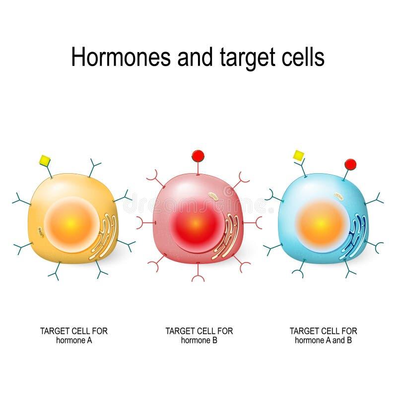 Hormonen, receptoren en doelcellen royalty-vrije illustratie