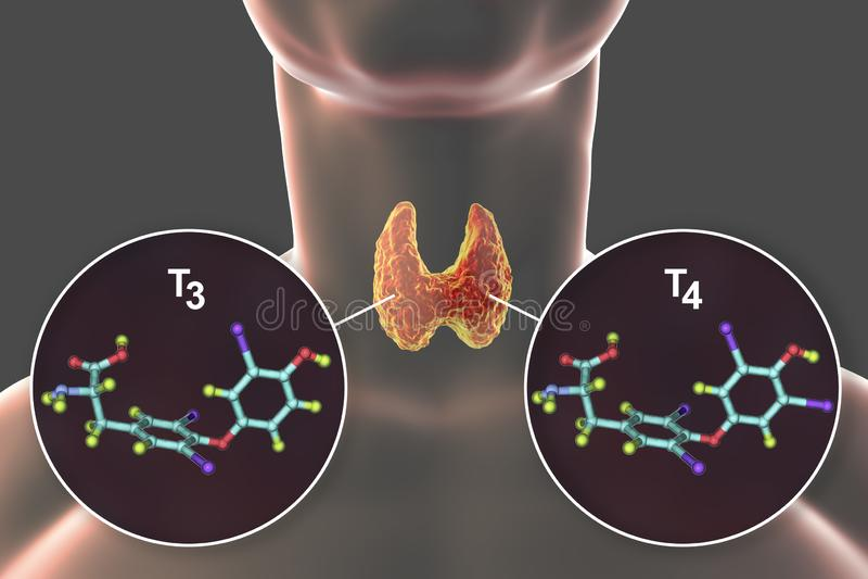 Hormoner av sköldkörtelT3 och T4 stock illustrationer