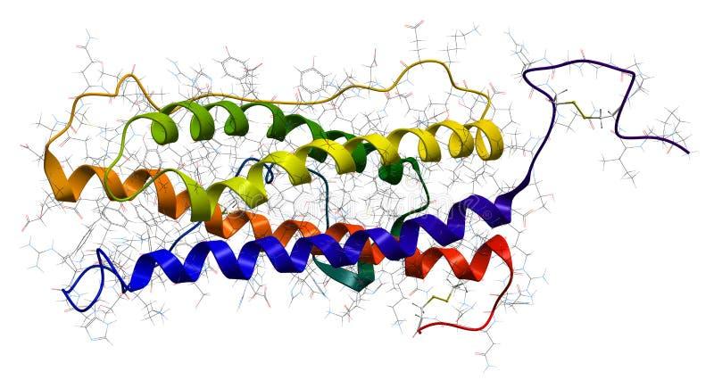 hormonprolactin royaltyfri illustrationer