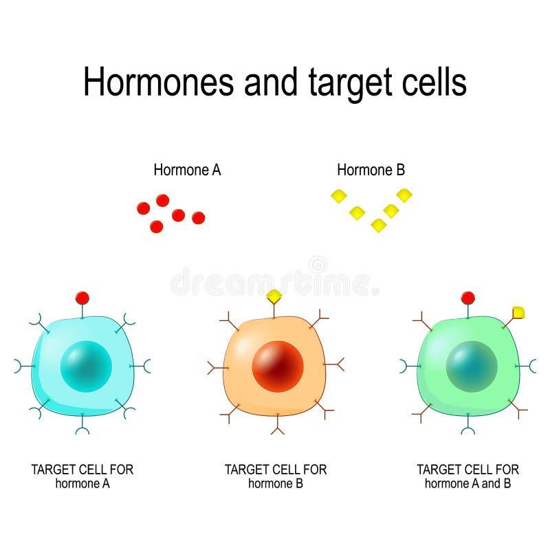 Hormony, receptory i cel komórki, ilustracja wektor