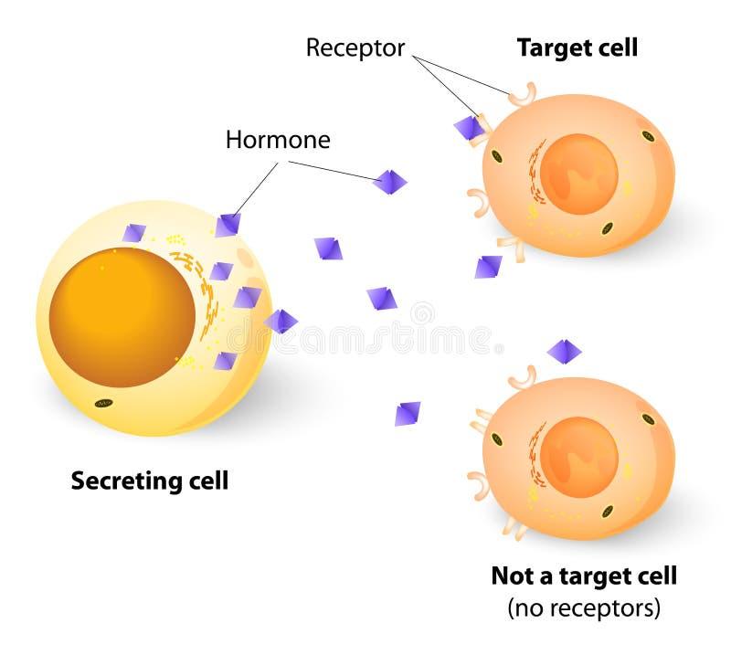 Hormony, receptory i cel komórki, ilustracji