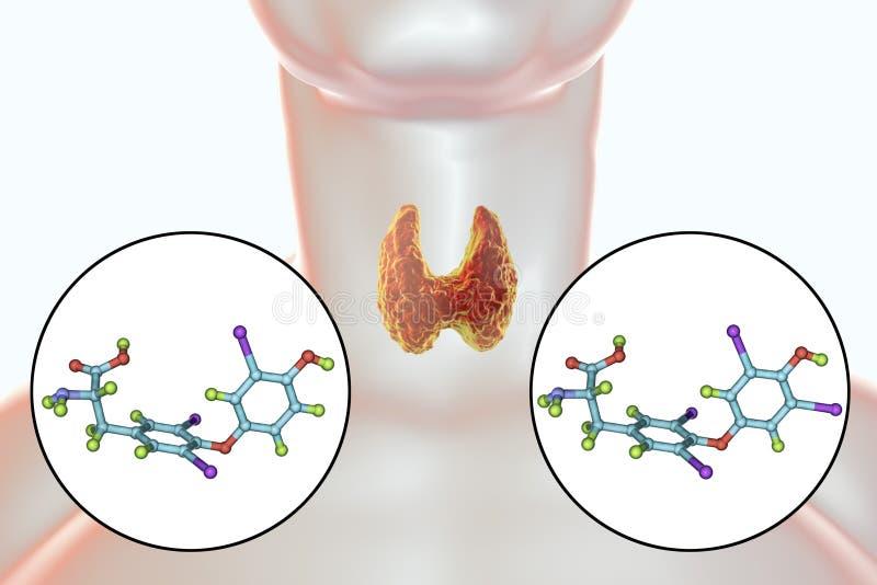 Hormony tarczycowego gruczołu T4 i T3 royalty ilustracja