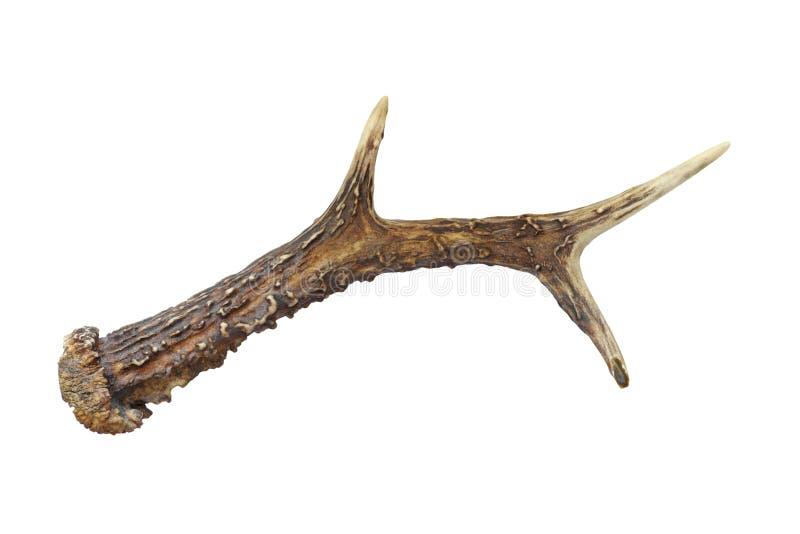 Horn del capriolo immagini stock libere da diritti