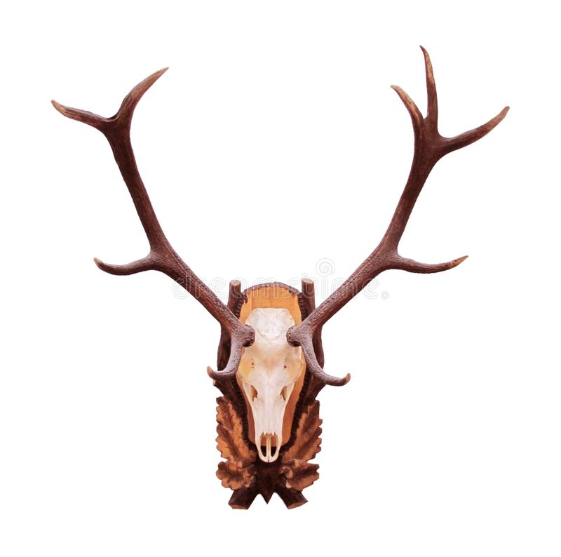 horn på kronhjorthjortar royaltyfri foto