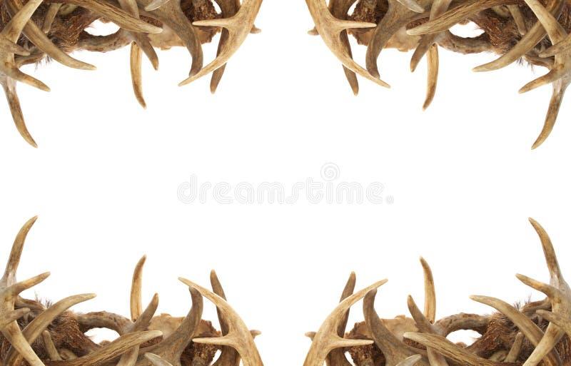 horn på kronhjortkanthjortar royaltyfri foto