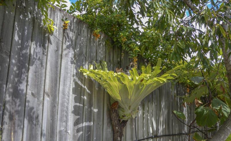 Horn- växt för fullvuxen hankronhjort royaltyfria foton