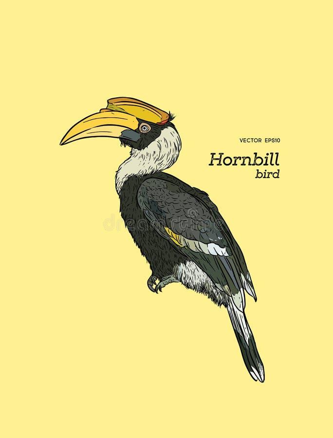 Hornbill de varios colores oriental, vector del bosquejo del drenaje de la mano ilustración del vector