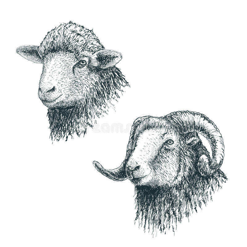 Horned ram and lamb. Set of sheeps.Hand drawn egraving style.Vector illustration royalty free illustration