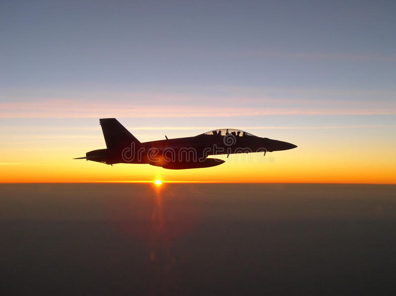 Hornet Against the Setting Sun royalty free stock images