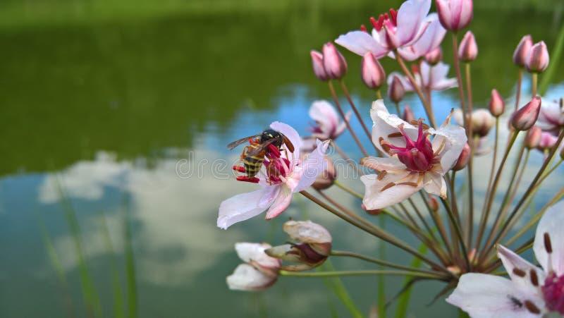Hornet na kwiacie i woda odbija niebo obrazy stock