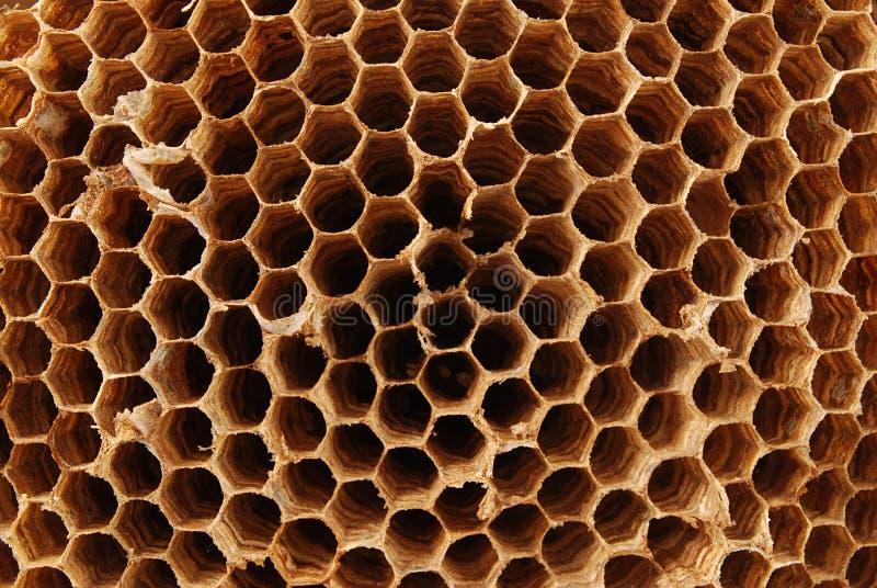 Hornet nest stock photography
