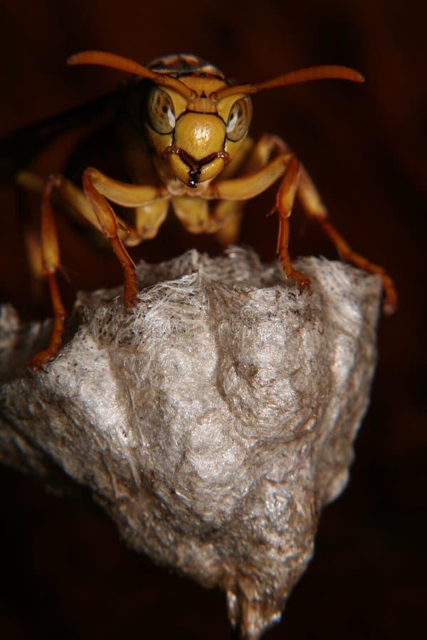 Free Hornet Nest Royalty Free Stock Images - 697639
