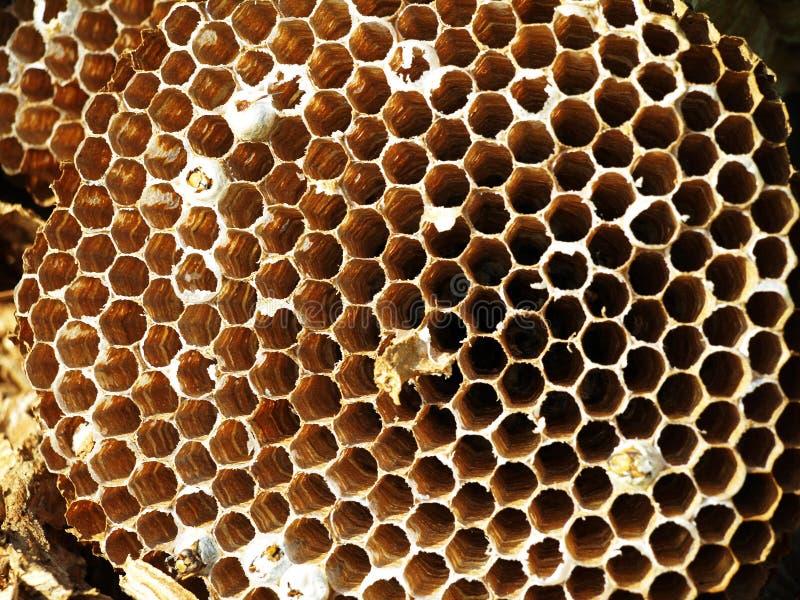 hornet's nest stock photography