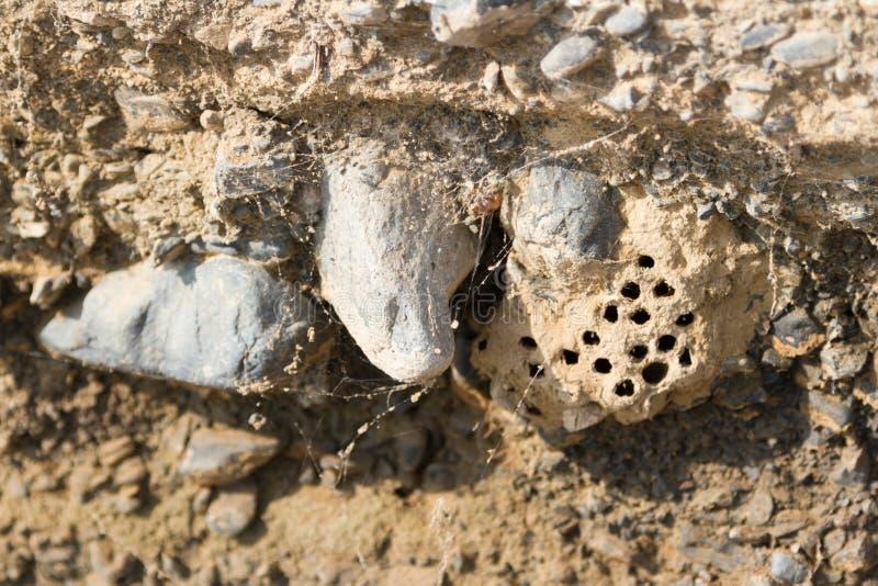Hornet's nest on the rocks stock images