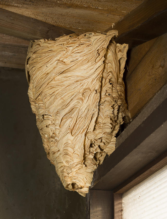 Download Hornet's nest stock photo. Image of sting, wasp, building - 41459866