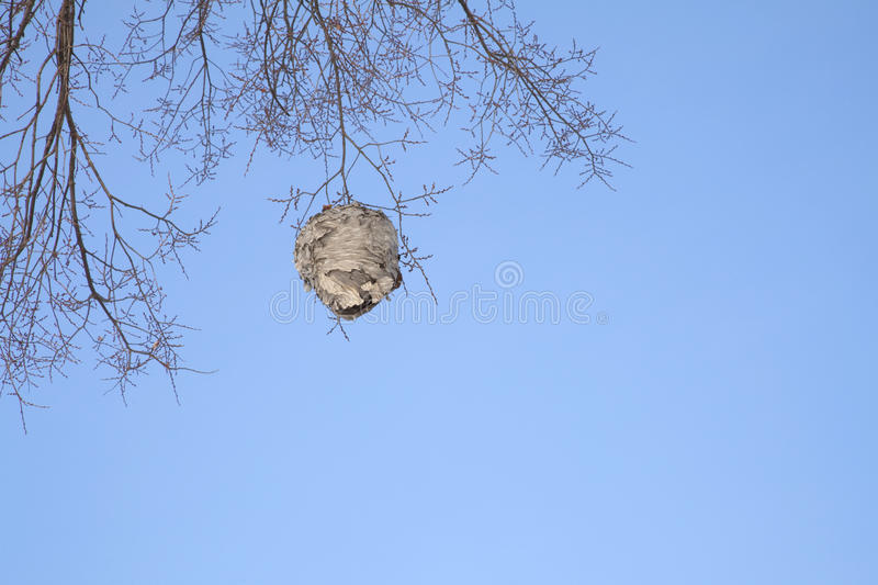 Hornets Nest in Late Autumn. On a Clear Blue Sky royalty free stock photography