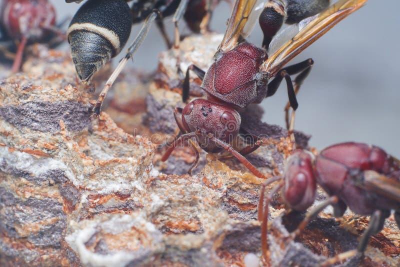 Hornets nesting stock photo