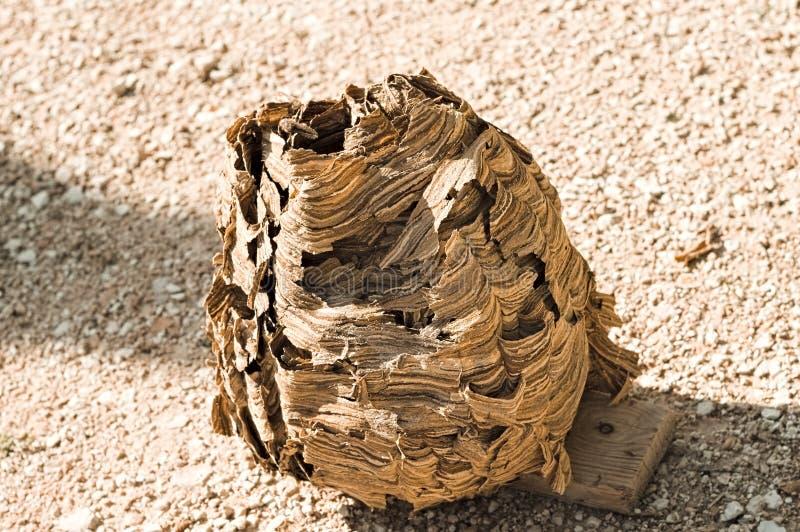 Hornissenbienenstock - Nest von Wespen lizenzfreies stockfoto