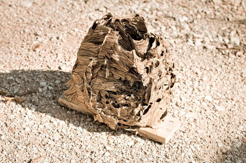 Hornissenbienenstock - Nest von Wespen stockfotos