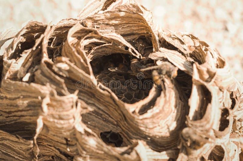 Hornissenbienenstock - Nest von Wespen stockfoto