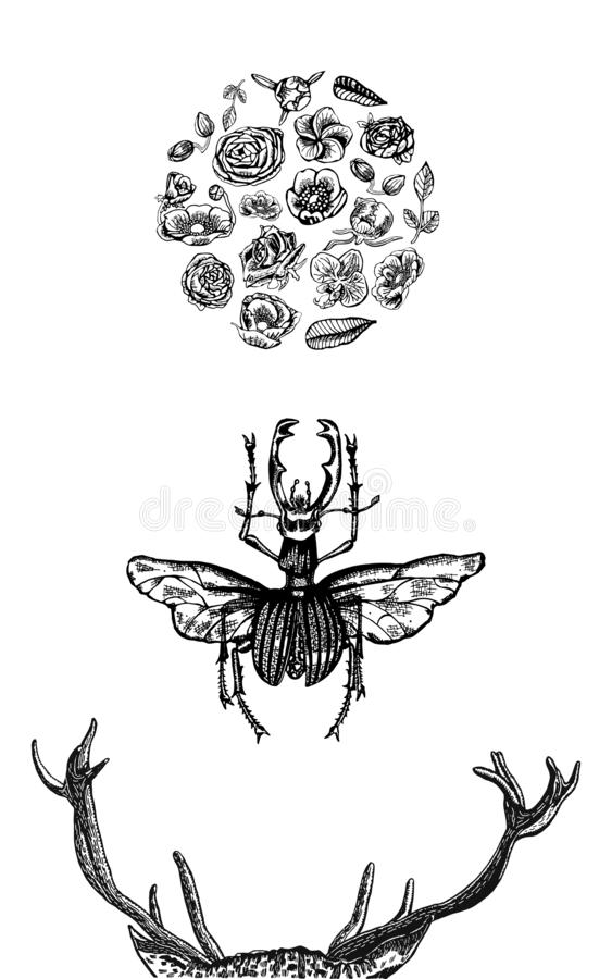 Horns of stag, stag beetle and circle of blooming flora, hand drawn in black and white - VECTOR stock illustration