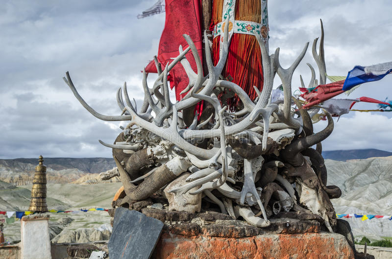 Horns, tusks and antlers of ancient dead animals, Upper Mustang, Nepal. Horns, tusks and antlers of ancient dead animals on top of Lo Manthang king's palace roof stock image