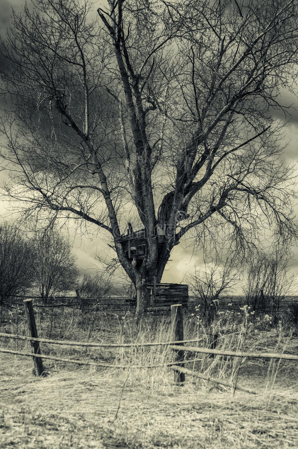 The horrible house on the scary trees stock photos
