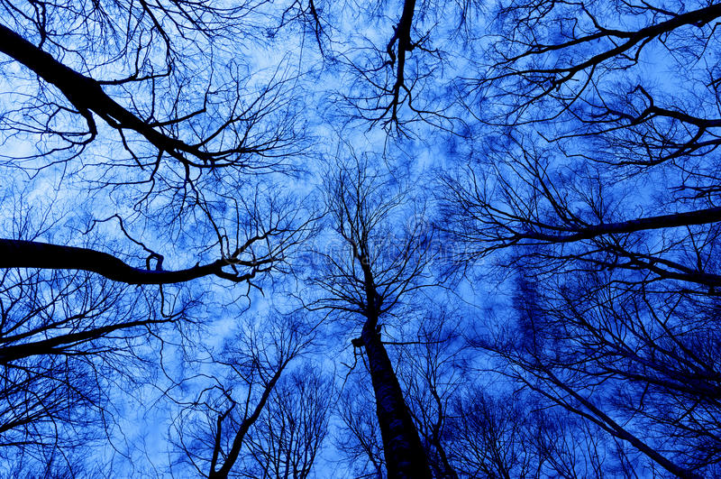 Horror forest at night. With a directly below persective stock photography